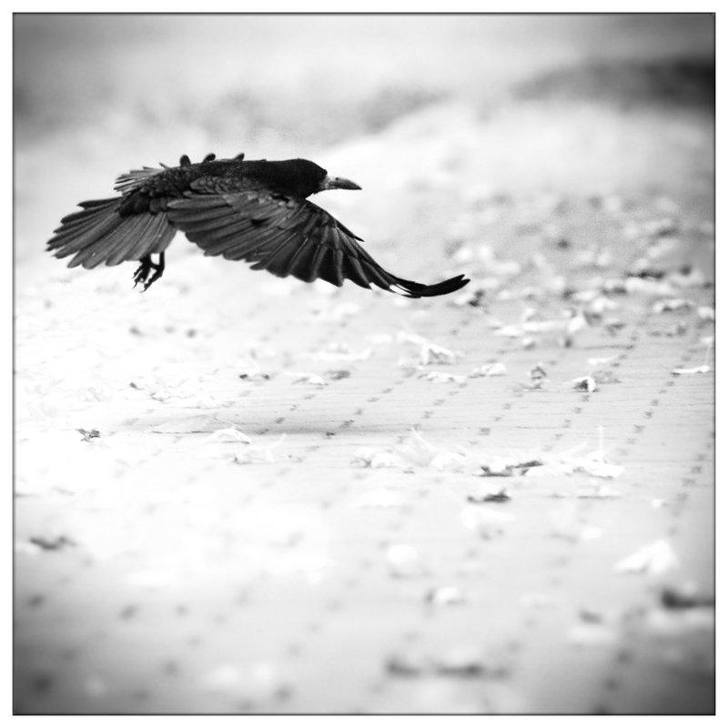 fly_to_freedom_by_leoatelier-d9gj8k5.jpg