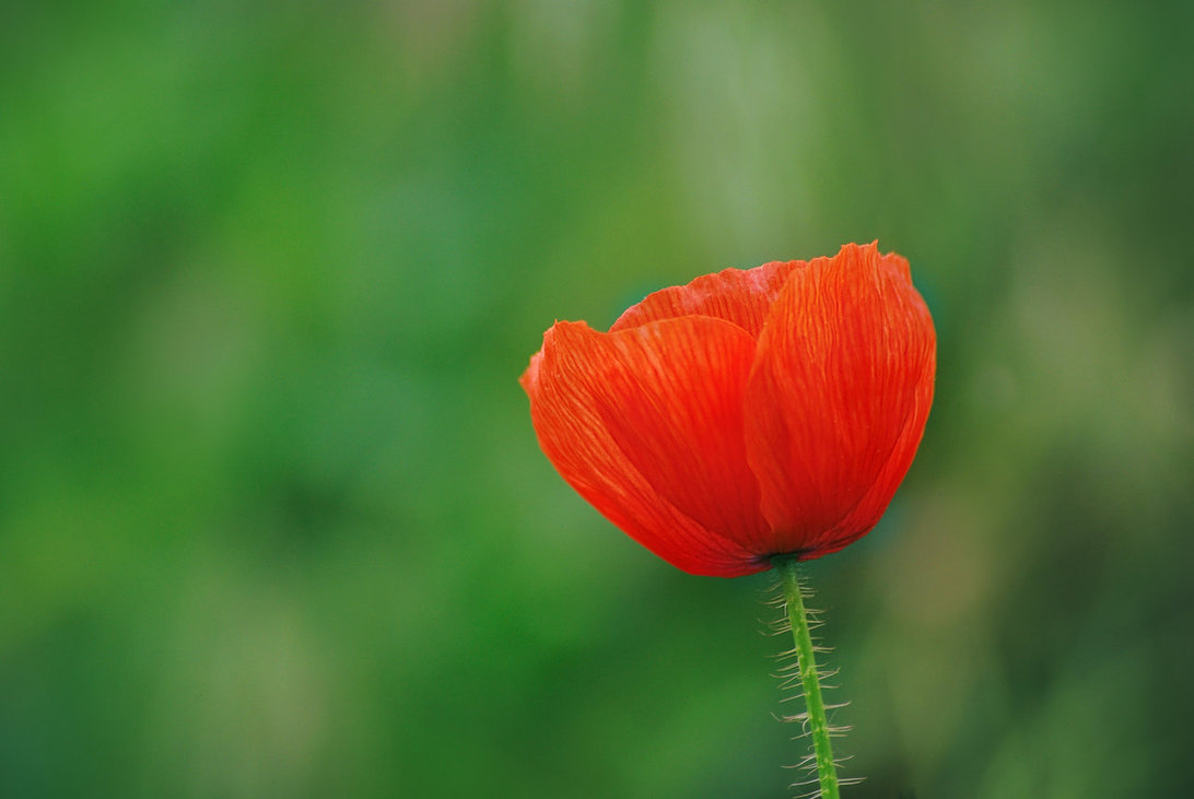 red_and_green_by_leoatelier-dbecf31.jpg