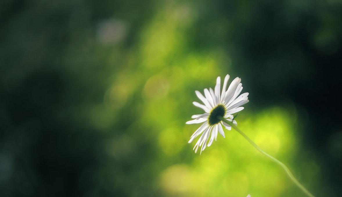 soft_and_white_by_leoatelier-daen2ub.jpg